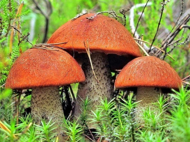 image - Приметы о грибах